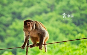 河南娱乐-猕猴表演