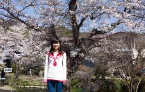 【山梨县图片】赴一场樱花的约会 | 日本·本州:大阪 京都 箱根 横滨 东京