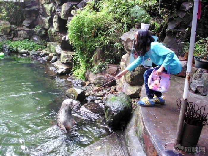 9.22-23杭州喜宴,顺游西湖和杭州动物园-虎跑51
