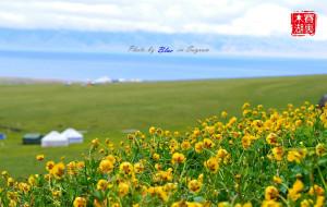 【博尔塔拉图片】新疆博乐 - 醉美赛里木湖(5月底最佳,山花烂漫)