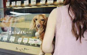 【台南图片】【TAIWAN,很台湾】不仅是美食美景,更美是风土人情…11天10夜台南垦丁花东台北全纪实