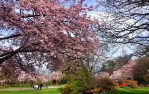 【温哥华图片】#游记小赛#王后公园:温哥华的颜值在这里