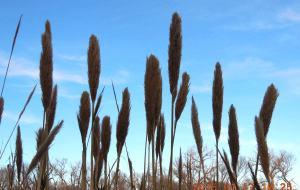 【德克萨斯州图片】2015年01月17日,美国德克萨斯州布拉索斯河畔,冬天里的春天(2015-01-21上传)