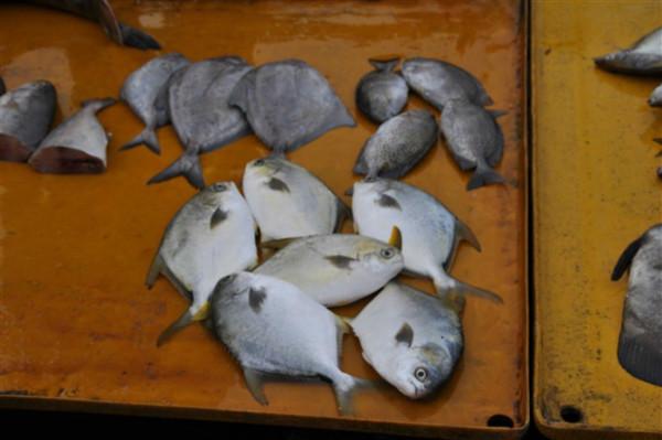 躺在铁板上的鱼摆摆,大白鱼,我这么叫他的.