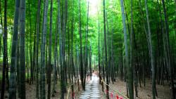 日照景点-日照竹洞天风景区