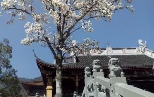 【天目山图片】初春的禅源寺---久久不能忘怀的那棵树