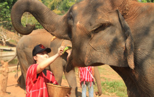 清迈娱乐-帕塔拉大象农场