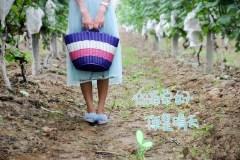 #消夏计划#走进七月的葡萄园