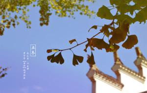 """【孝感图片】看一场还未黄透的""""金秋银杏"""""""