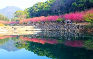 【福州图片】福州国家森林公园---美丽的天然氧吧