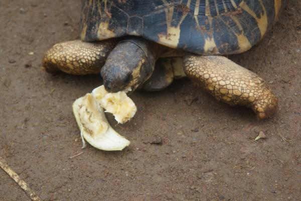 的肉食性动物-马岛獴fossa   3、皮瑞瓦自然保护区Peyreiras Reserve,