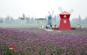 【孝感图片】湖北孝感金卉庄园:幸福像花儿一样