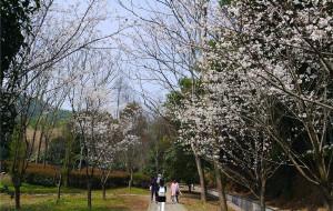【绍兴图片】2016.3.12绍兴大香林及柯桥万达广场