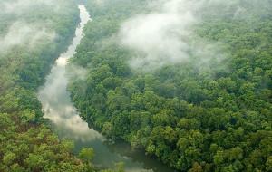 【古晋图片】走吧!去看热带雨林——植物猎人之东马砂拉越古晋自驾游