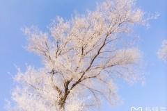南方姑娘,在北国的冬天里
