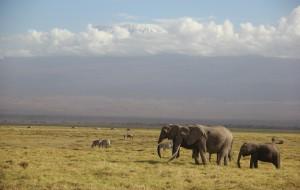 【马赛马拉国家公园图片】走进非洲(肯尼亚+南非)