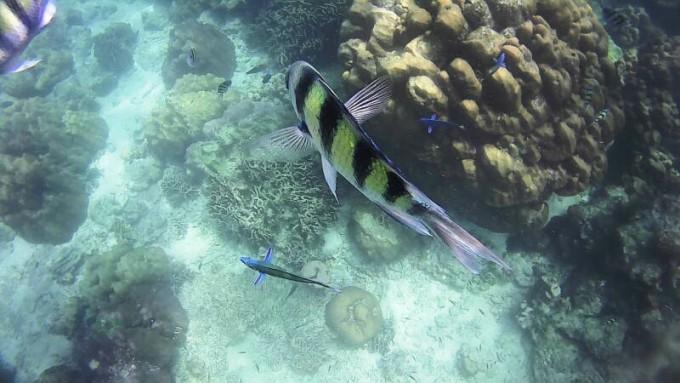 壁纸 海底 海底世界 海洋馆 水族馆 680_383