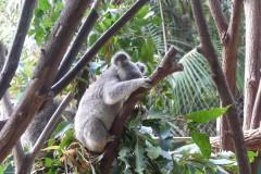 跟着阿毛游世界~2012年8月澳洲8日游
