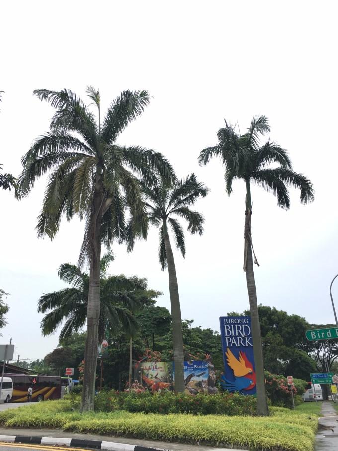 儿童节的礼物--6/1--6/5新加坡5日亲子游