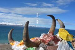因你叫西藏——拉萨、林芝、山南、日喀则、纳木错10日