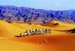 沙坡头植树 沙漠CS拓展 放风筝踏青
