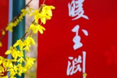 绿色出游-春暖玉渊潭(第28届樱花节一日游记)