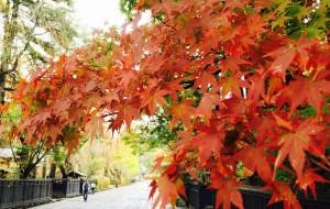 【青森县图片】Amazing 探寻静谧东北 日本红叶祭之旅