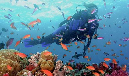 巴厘岛 图兰奔体验深潜一日游 自由号沉船 珊瑚花园