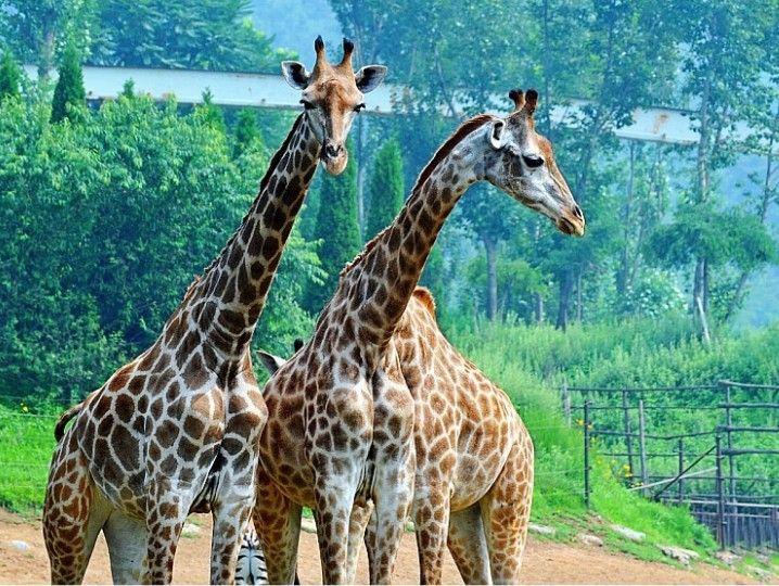 即买即用 大连森林动物园门票 电子票/快速入园 感触动物世界的各种