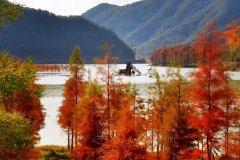 火红的梦——台州·临海红杉林一日记