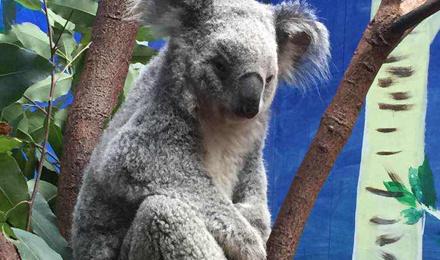 【广州出发】长隆野生动物园 珠海海洋王国 长隆欢乐世界三日游(不进