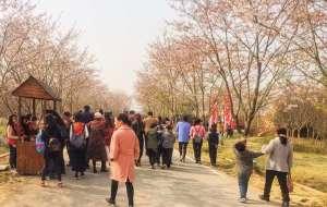 【句容图片】#游记小赛#清明前的踏青红色之旅——茅山