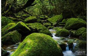 【九州图片】探寻《幽灵公主》的那片森林——屋久岛