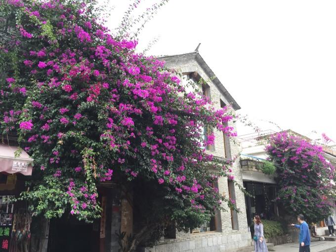 雲南,開滿鮮花的舒閒之地 15