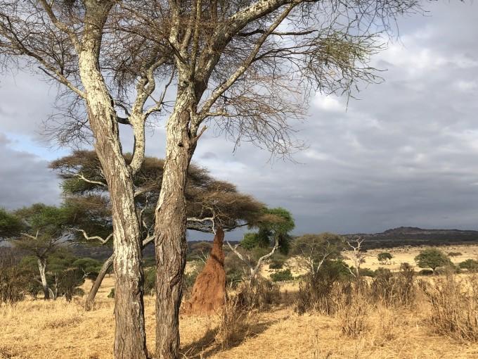 坦桑尼亞自助遊攻略